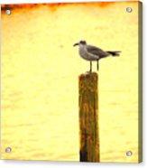 Seagulls Sunset Acrylic Print