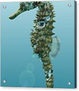 Seahorse 3d Render Acrylic Print