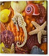 Seahorse And Assorted Sea Shells Acrylic Print by Garry Gay