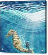 Seahorse Blues Acrylic Print