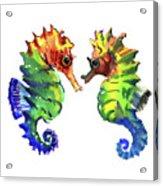 Seahorse Love Acrylic Print