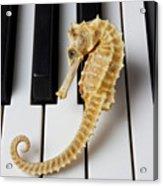 Seahorse On Keys Acrylic Print by Garry Gay