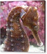 Seahorse2 Acrylic Print
