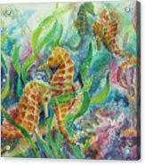 Seahorses Three Acrylic Print