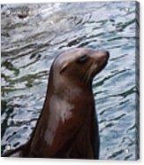 Seal Acrylic Print