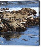 Seal Island Acrylic Print