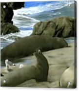 Seal Rock Acrylic Print