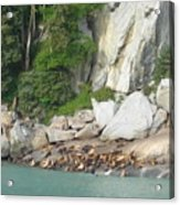 Seals Enjoying Alaskan Sun Acrylic Print
