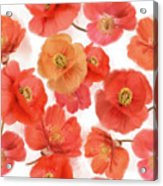 Seamless   Pattern Of Watercolor Poppy Flowers Acrylic Print