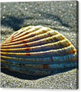 Seashell After The Wave Acrylic Print