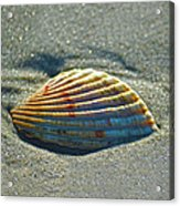Seashell After The Wave Square Acrylic Print