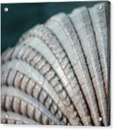 Seashell Designs Acrylic Print