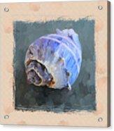 Seashell IIi Grunge With Border Acrylic Print