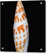 Seashell In Fishnet Acrylic Print