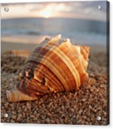 Seashell In The Sand Acrylic Print