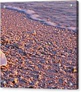Seashell On The Beach, Lovers Key State Acrylic Print