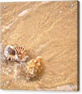 Seashell Turbulence Acrylic Print