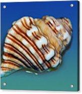Seashell Wall Art 1 Acrylic Print