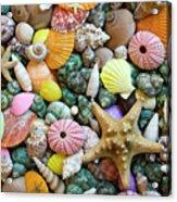 Seashells 3 Acrylic Print