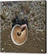 Seashells By The Sea Acrylic Print