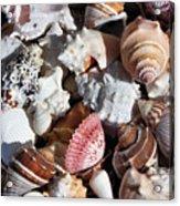 Seashells Acrylic Print