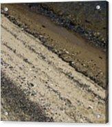 Seashells On A Beach Acrylic Print