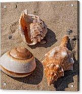 Seashells On The Sand Acrylic Print