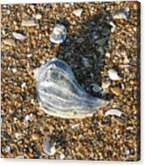 Seashells On The Seashore Acrylic Print
