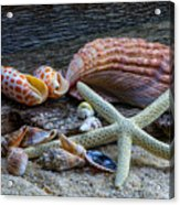 Seashells And Driftwood Acrylic Print