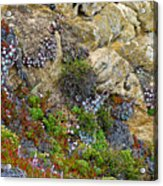 Seaside Cliff Garden In Point Lobos State Reserve Near Monterey-california  Acrylic Print