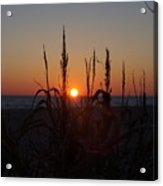 Seaside Seagrass And Sunsets Acrylic Print