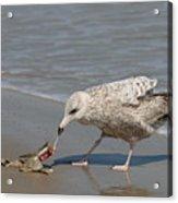 Seaside Snack - 3 Acrylic Print