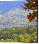 Seasonal Color Acrylic Print