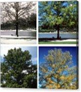 Seasons Of Time Acrylic Print