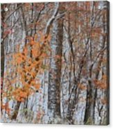 Seasons Overlapping Acrylic Print
