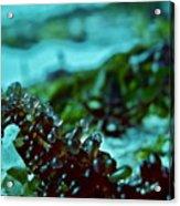 Seaweed 1 Acrylic Print