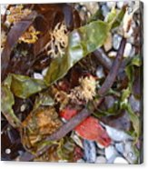 Seaweed And Pebbles Acrylic Print