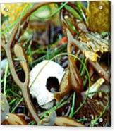 Seaweed Monster Acrylic Print