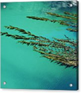 Seaweed Patterns Acrylic Print
