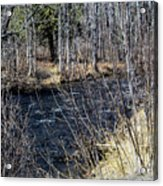 Secluded Brook Acrylic Print