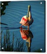 Secret Admirer Acrylic Print