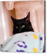 Secret Mission For Catnip Acrylic Print