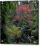 Secret Of The Forest Acrylic Print