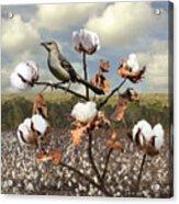 Secret Of The Mockingbird Acrylic Print