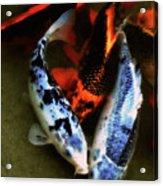 Secrets Of The Wild Koi 10 Acrylic Print