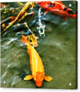 Secrets Of The Wild Koi 11 Acrylic Print