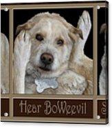 See Boweevil Acrylic Print