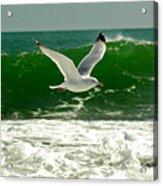 See Gull Acrylic Print