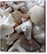 See Sea Shells Fom The Sea Acrylic Print
