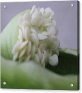 Seed Ala Bell Acrylic Print
